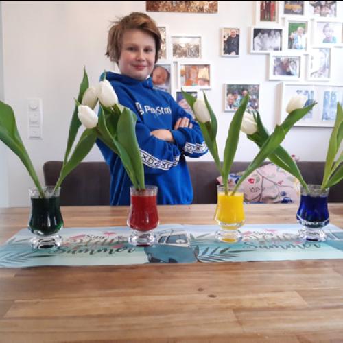 """""""Pflanzen - Wachstum und Keimung"""""""